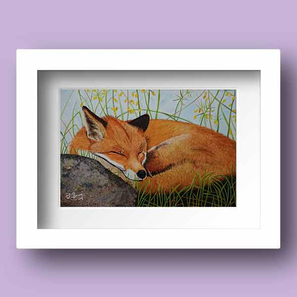 Limited Edition Watercolour Print of a sleeping fox resting on a stone