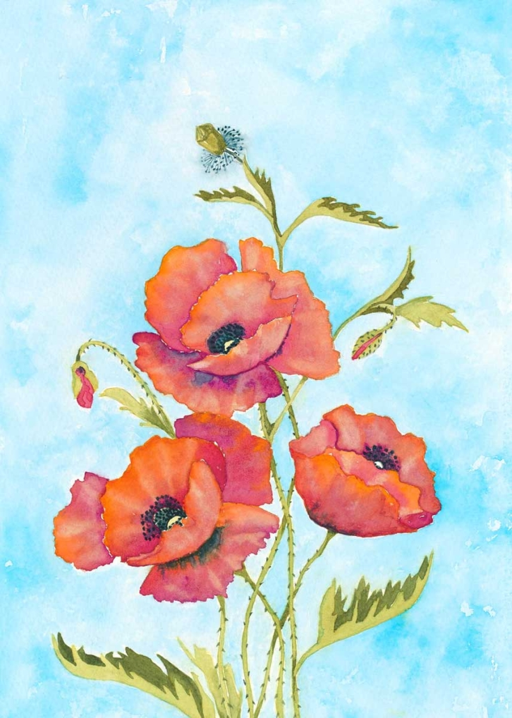 An Original Watercolour Painting of Stunning Corn Poppies by Galway Artist Pat Flannery.jpeg