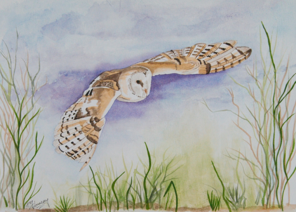 An Original Watercolour Painting of an Owl Taking a Flight in Evening by Galway Artist Pat Flannery.jpeg