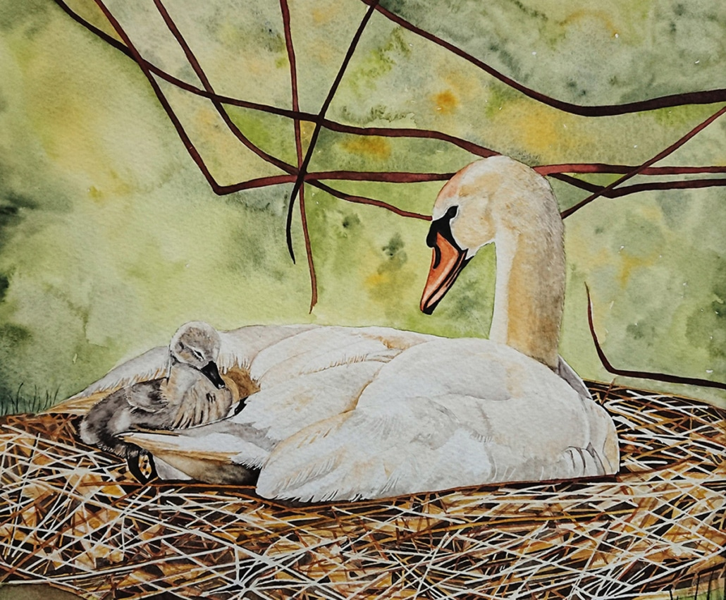 Original Watercolour Painting of a Mother swan cradling her cygnet by Galway Artist Pat Flannery.jpeg