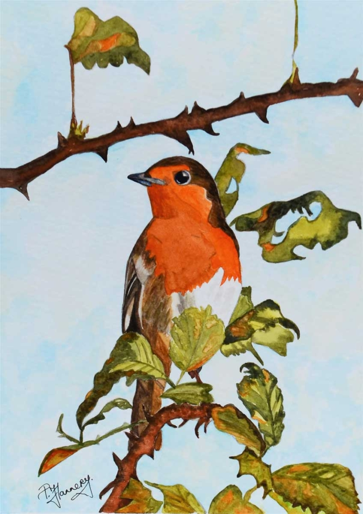 An Original Watercolour Painting of an Irish Robin Redbreast Perched on a Branch by Galway Artist Pat Flannery.jpeg