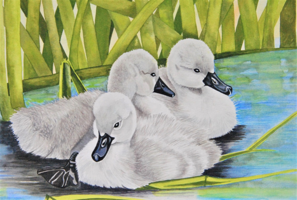 An Original Painting Showing the Love of Siblings through Beautiful Swans by Galway Artist Pat Flannery.jpeg