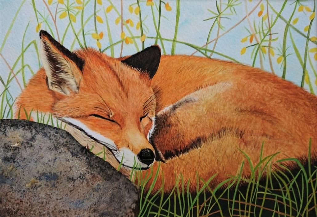 An Original Painting of an Irish Fox Deep in Sleep in Watercolour by Galway Artist Pat Flannery.jpeg