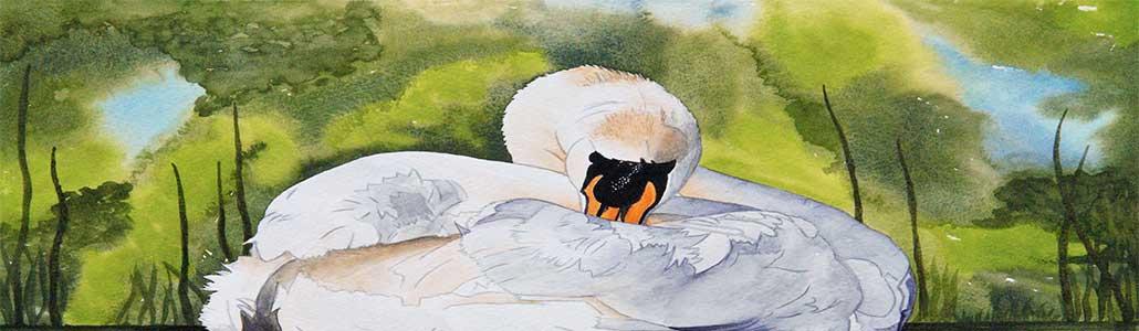 An Original Watercolour Painting of a Sleeping Swan by Galway Artist Pat Flannery.jpeg