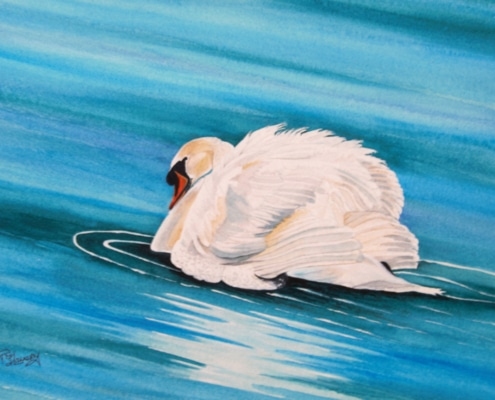 An Original Watercolour Painting of a Majestic Lady Swan Taking a Swim by Galway Artist Pat Flannery.jpeg