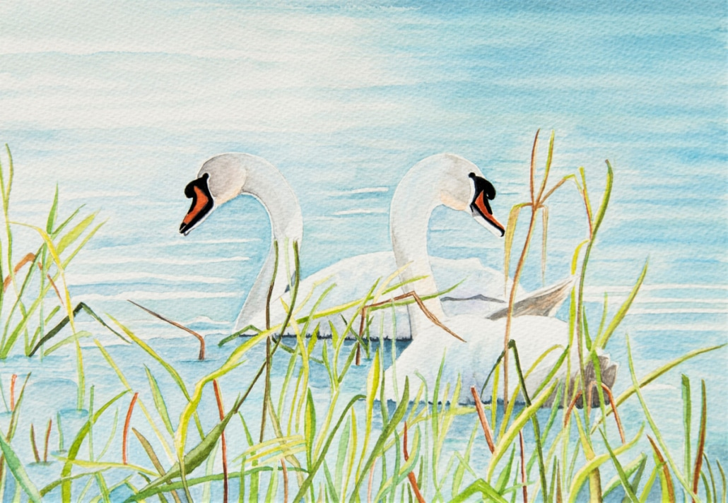 An Original Watercolour Painting of a Swan Couple depicting Togetherness by Galway Artist Pat Flannery.jpeg