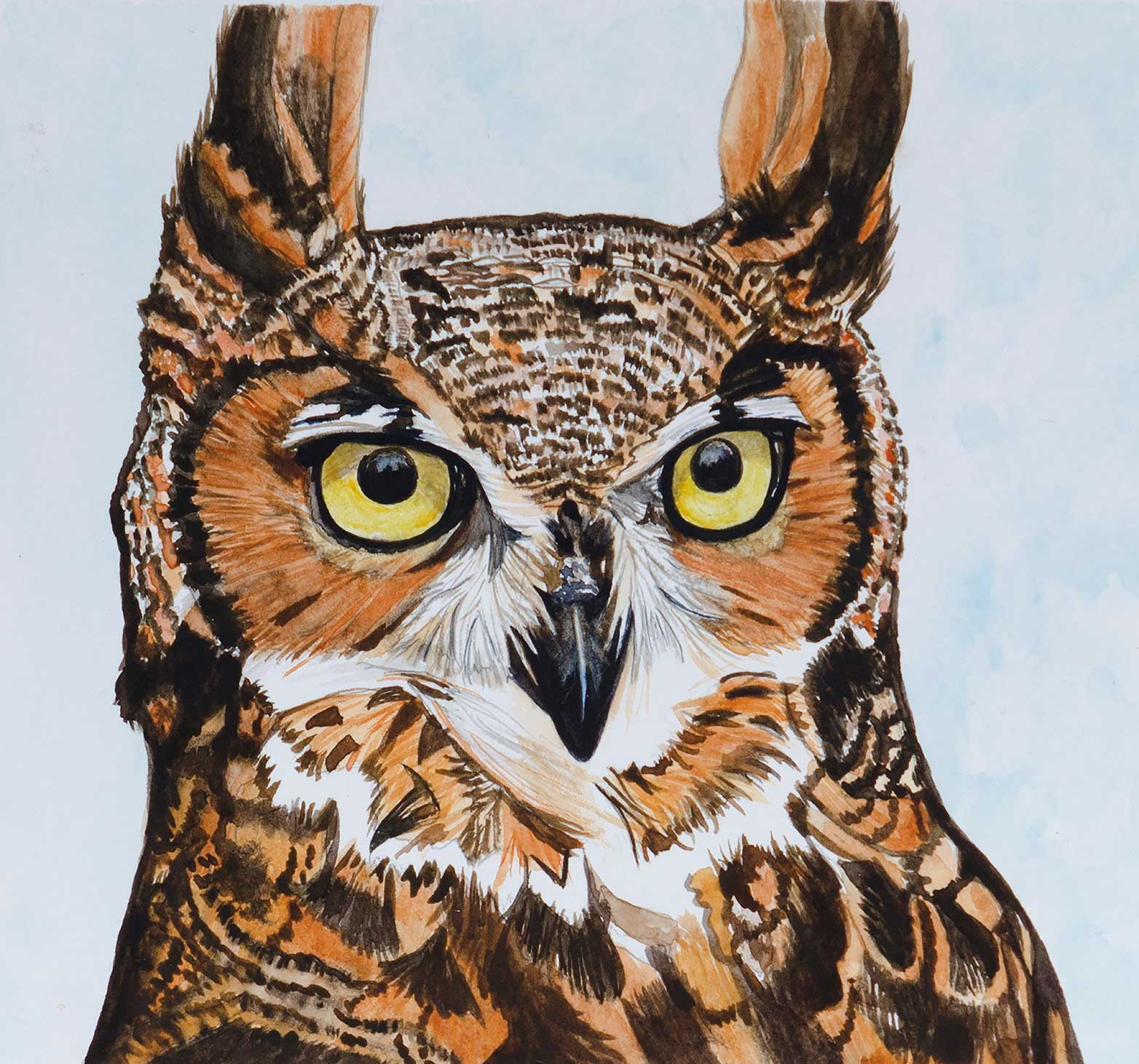 An Original Watercolour Painting of a Little Owl by Galway Artist Pat Flannery.jpeg