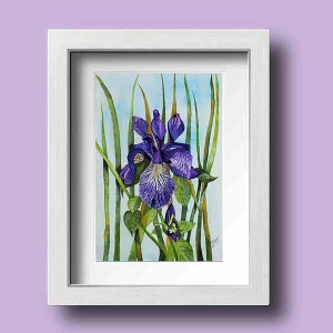 A Beautiful Framed Painting of the Glorious Iris by Galway Artist Pat Flanery.jpeg
